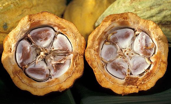 El Cacao - Historia del chocolate